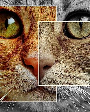 cat-1394585_1920.jpg
