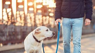 Ζώα συντροφιάς: Σε δημόσια διαβούλευση το νομοσχέδιο - Όλα όσα πρέπει να γνωρίζετε για το πρόγραμμα