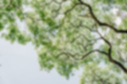 green-leafed-tree-low-angle-photography-