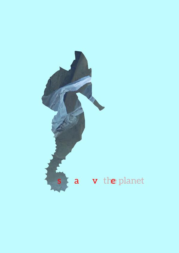 koral1.jpg