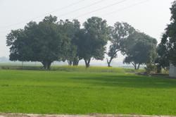 Gazipur
