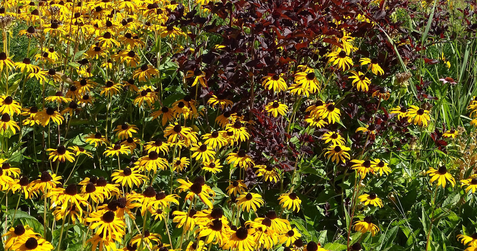 Native Prairie Plants Sun To Part Shade Mymbspirit
