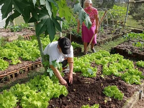 Hortas Comunitárias trazem o desenvolvimento comunitário