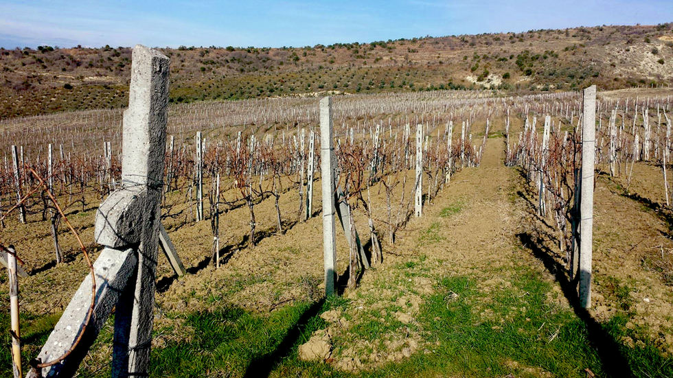 Prifti Family Vineyards 2012