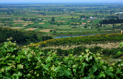 Albanica Wine Prifti Family Vineyards 20