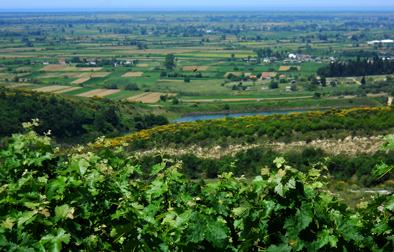 Albanica Wine Prifti Family Vineyards 20