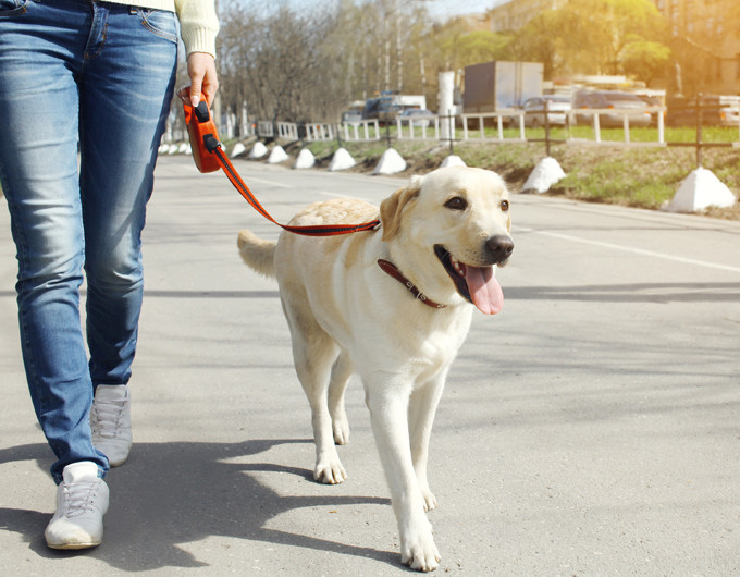 5 Tips for RV'ing with Pets