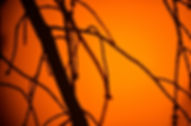 sol_02.jpg