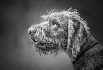 Dog Photographer in Hampshire