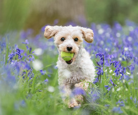 Bluebell Photoshoots in Hampshire