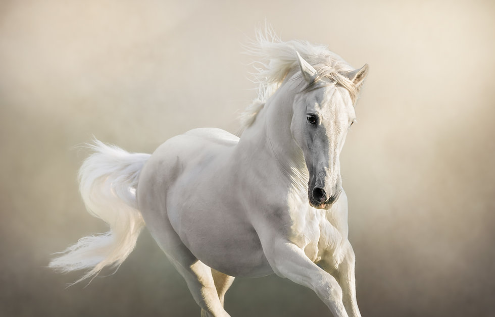 Equine photography in Hampshire