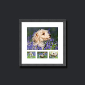 Beautiful framed images for your walls