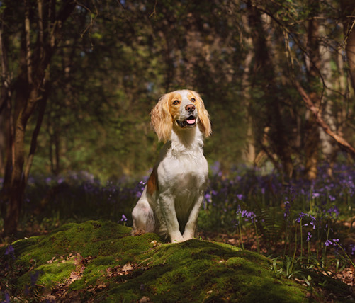 In a shady bluebell wood