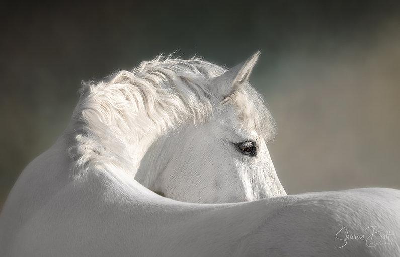 Horse Photographer Hampshire - Contact