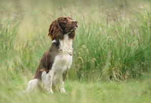 Cleo Bolt Photography.  Dog Photography Hampshire