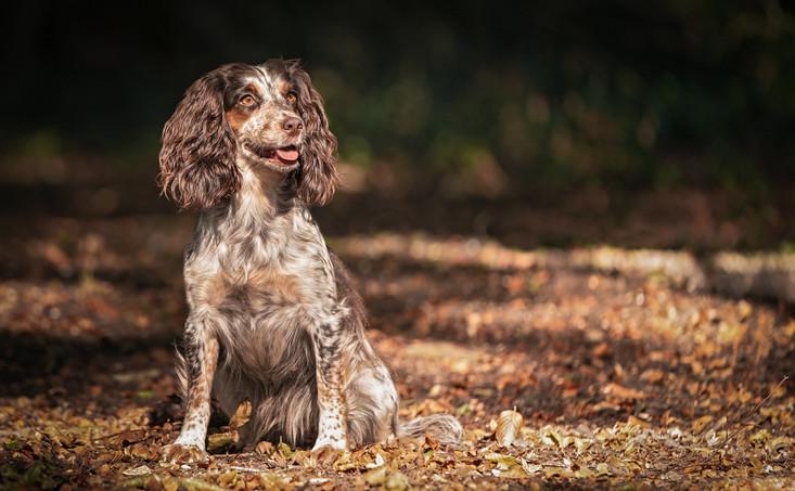 Favourite woodland walk.  Hampshire Dog Photography