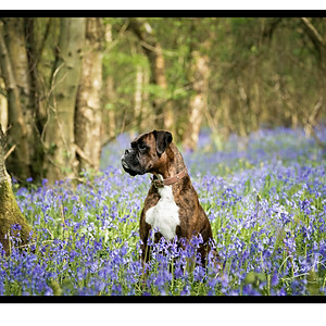 Stan and Bluebells