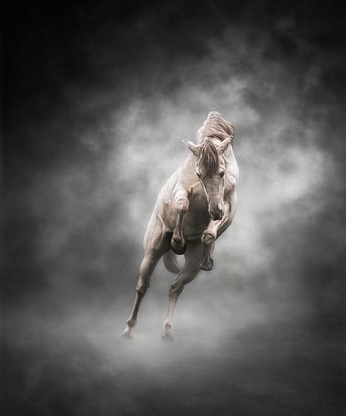 Horse Photographer Hampshire.
