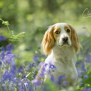 Chasing Sunbeams in the Bluebell