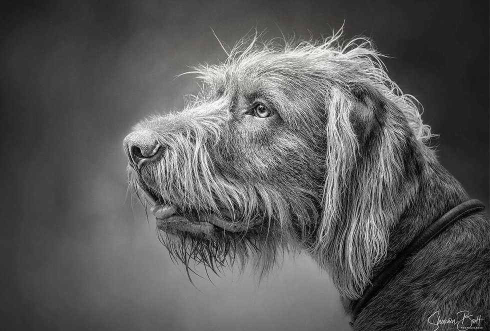 Dog Photography in Hampshire_edited.jpg