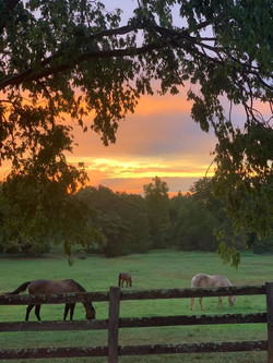 SEC horses at sunset.