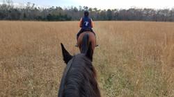 Fall trail rides on the Manassas Battlefield.