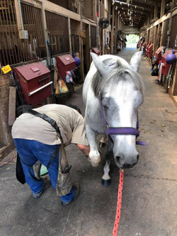 Several farriers routinely visit Stonebridge, but you can also bring your own.