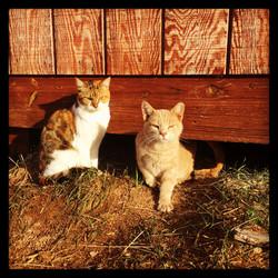 Two of SEC's barn kitties.