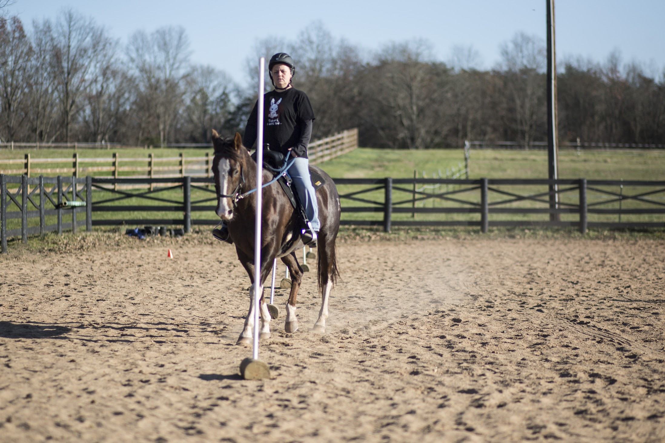 Working Equitation clinic Nov 2020
