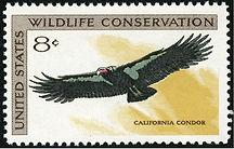 Wildlife_Conservation_California_Condor_