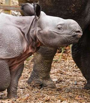baby rhino two website.jpg