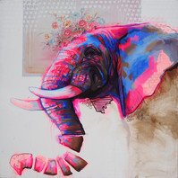 elephant19