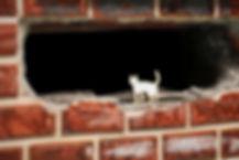 貓貓 (3).jpg