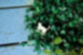 貓貓 (5).JPG