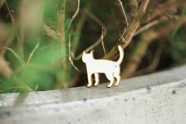 貓貓 (2).jpg
