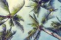 coconut-palm-tree (1).jpg