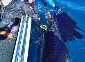 Alex's Fishing Report 27 July 2017