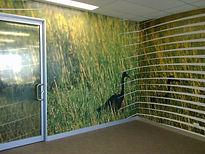 Wall Graphics Window Film Darwin