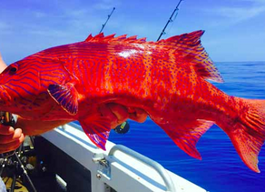 Alex's Fishing Report 24 November 2016