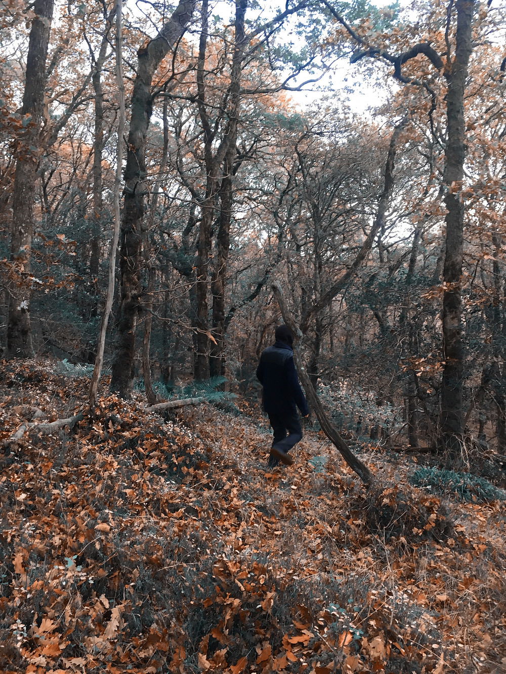autumn landscape of woodland with figure of person walking in center