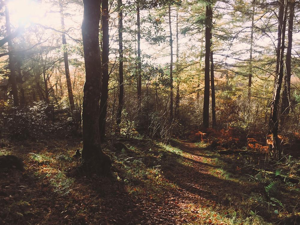 Sunlight peaking through woodland