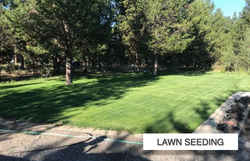 Lawn Seeding In La Pine Elite Landscapin