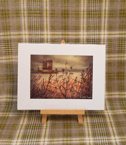 Scottish Flower at Castle Stalker