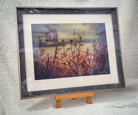 Scottish Flower at Castle Stalker - Framed