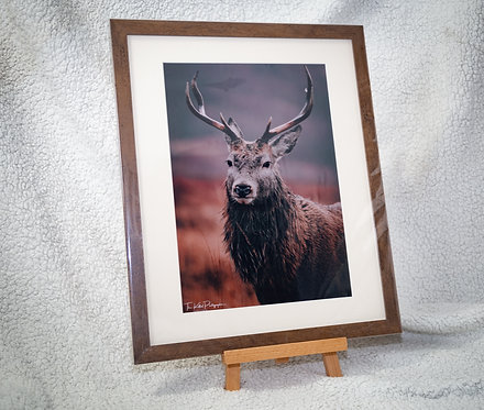 Proud Stag - Framed