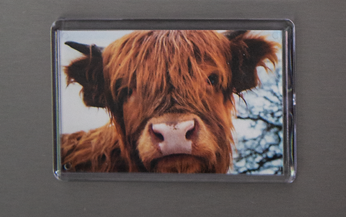 Baby Highland Coo Magnet