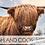 Thumbnail: 2022 Calendar - Highland Coos