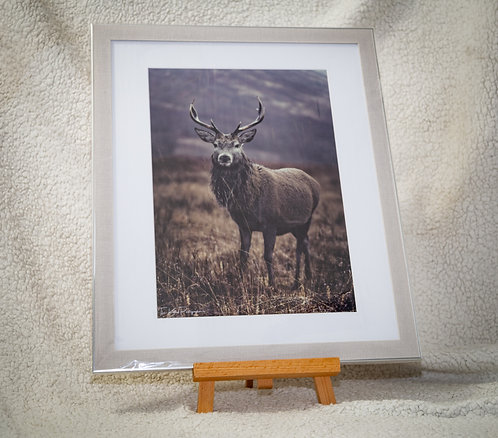 Majestic Stag - Framed