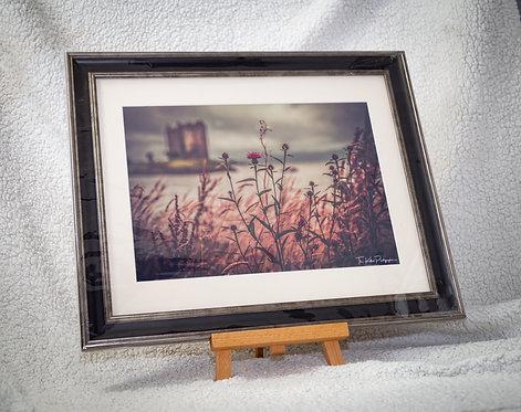 Thistle at Castle Stalker - Framed