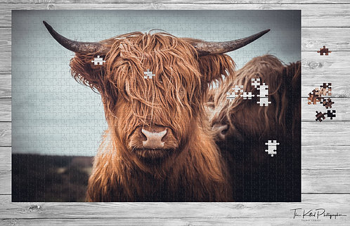 Highland Coo Jigsaw - 1000 piece